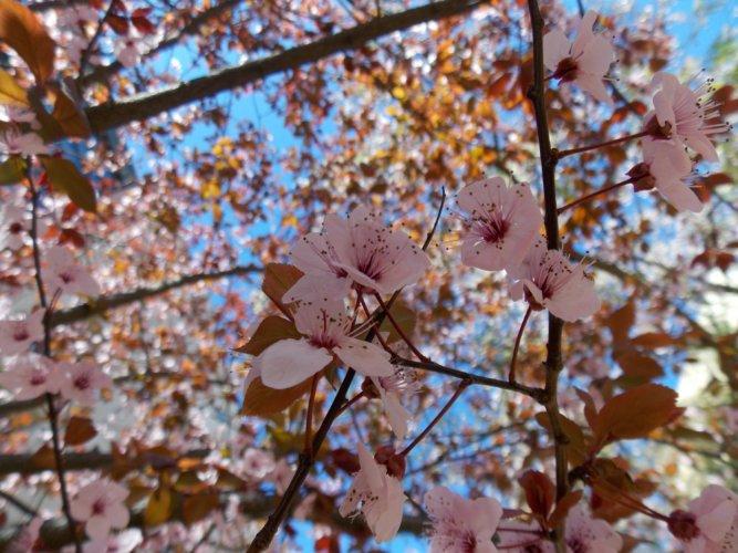 Frühlingsblüten in Barcelona