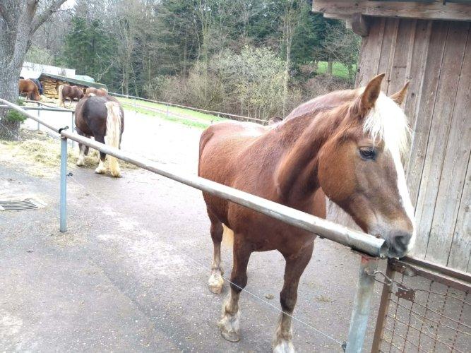 Thomashof Pferd