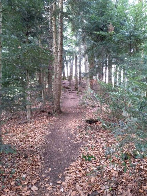 Thomashof - Weg zur Kapelle