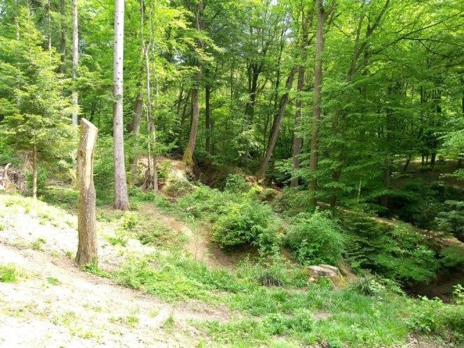Abenteuer im Herdermer Wald