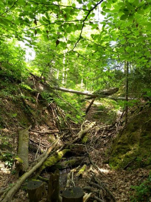 Bachlauf im Herdermer Wald
