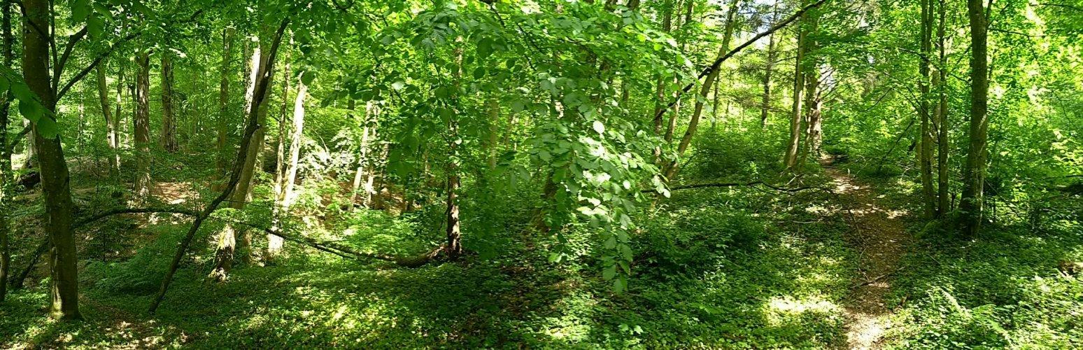 Pfad durch den Herdermer Wald