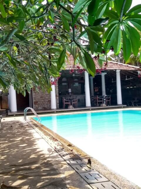 Hotel Pool in Negombo - Villa Araliya