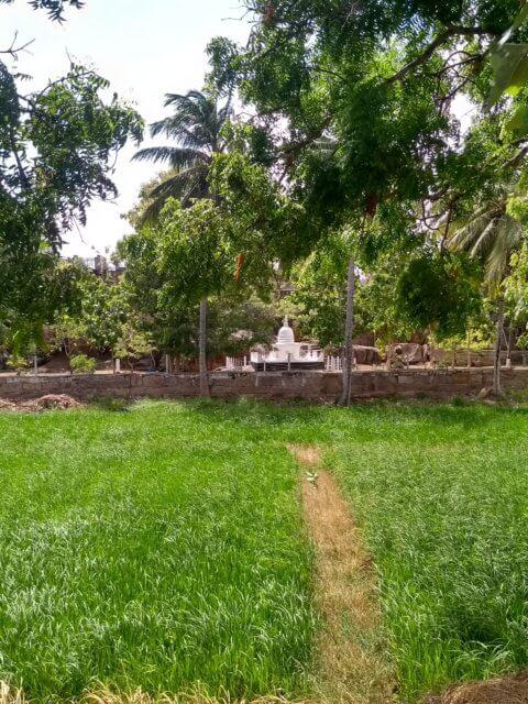 Kindertempel bei Anuradhapura