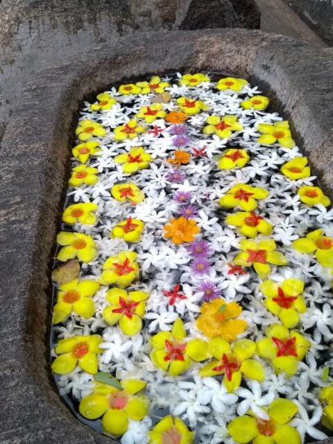 Blumenbad bei den Felsentempeln in Dambulla