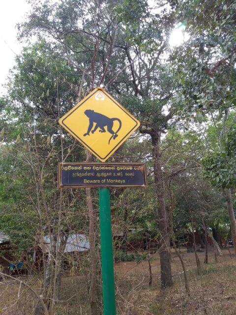 Obacht Affen