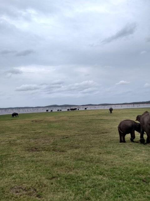 Safari Elefanten Herde