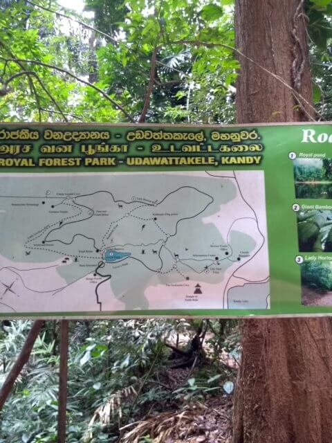 Royal Forest Park Kandy