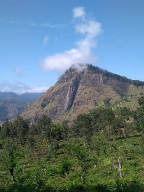 Ella Rock vom Weg zum Little Adams Peak