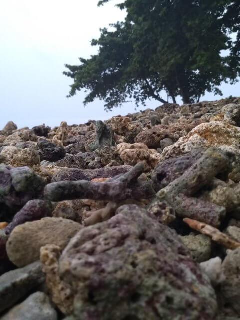 Bei Fort Galle, angespülte Korallen