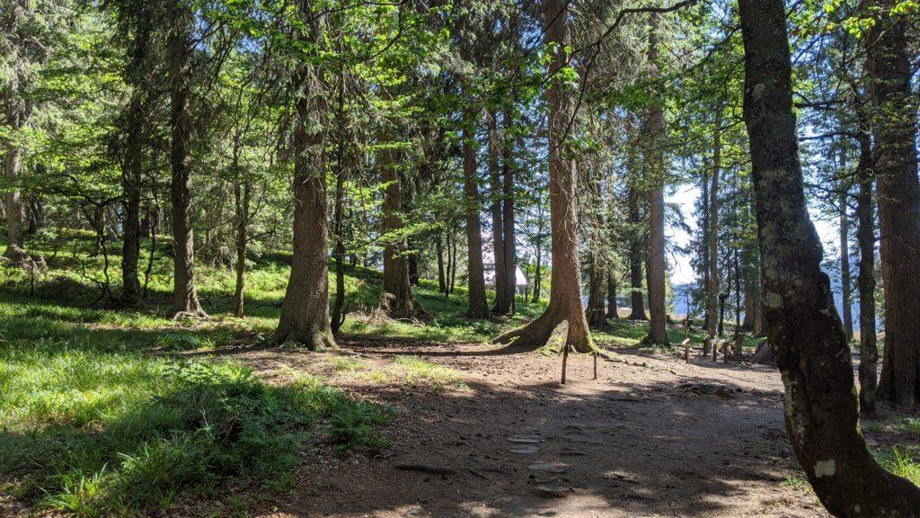 Wichtelpfad Feldberg - Ab in den Wald